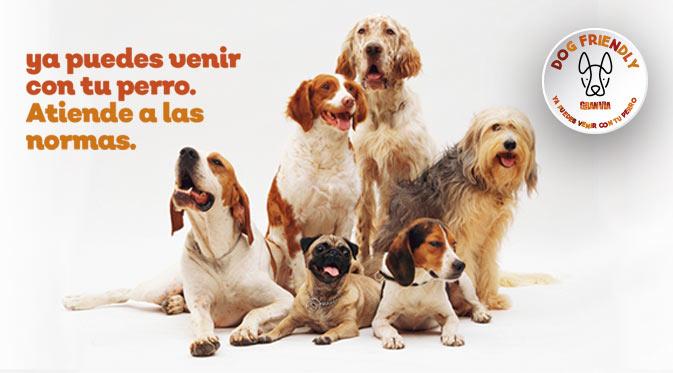 dog friendly noticia